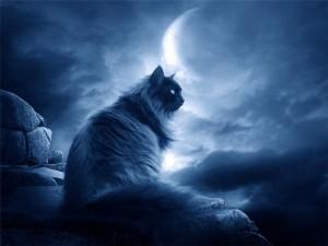 Интерпретация лунных дней по Зараеву